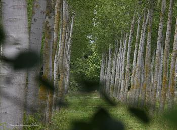 Joli sous bois à Velleron