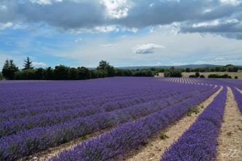 Couleur de Provence