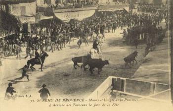 L'arrivée des taureaux le jour de la fête - Saint Remy de Provence