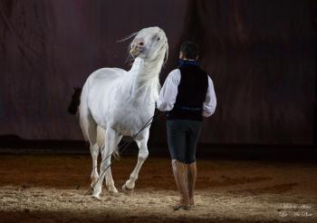 Cheval passion, cheval dansant