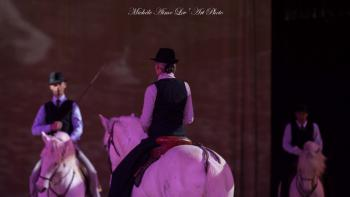 Cheval passion les chevaux de camargue