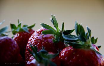 La fraise de carpentras, rouge et sucrée
